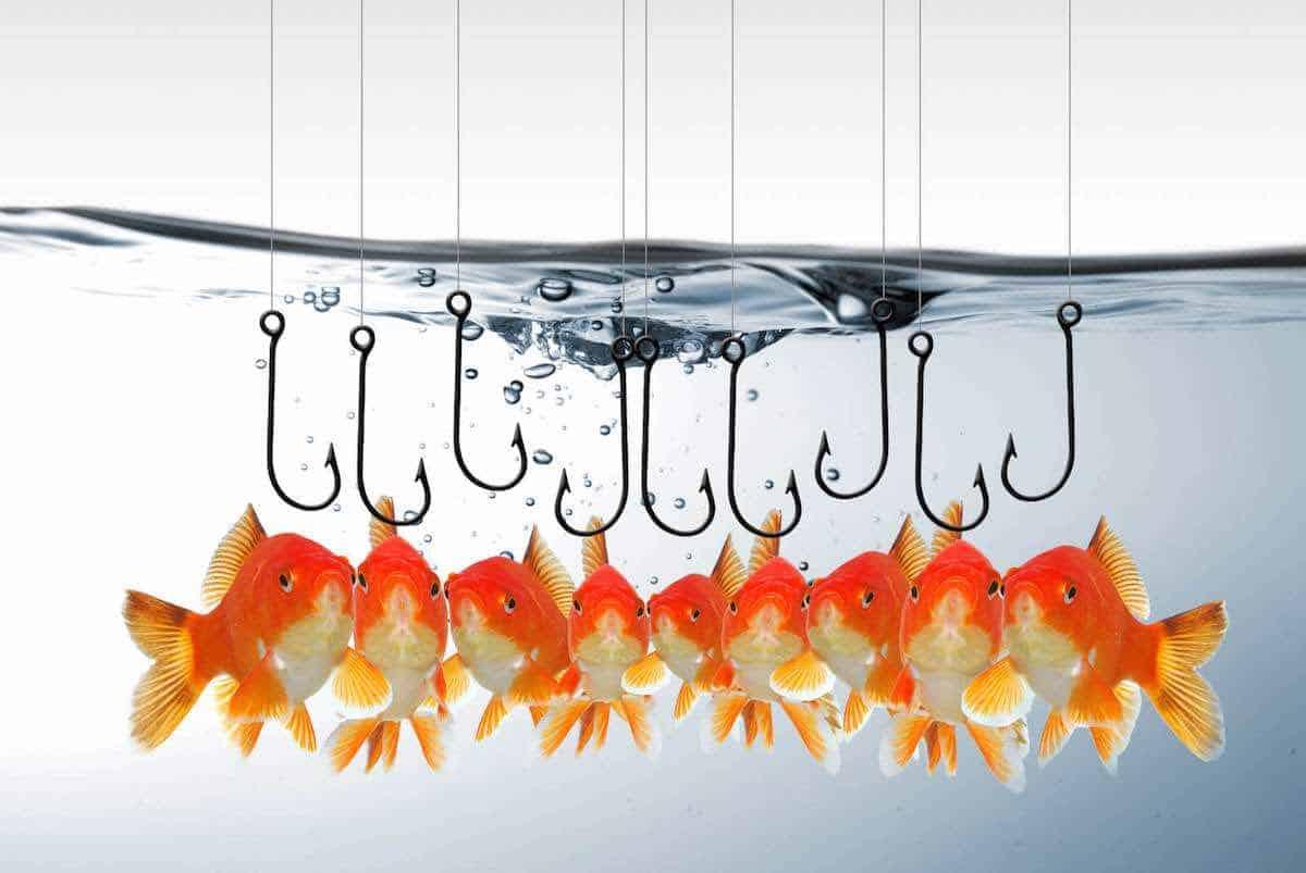 Trouver un titre percutant le mythe des poissons rouges for Ou trouver des poissons rouges